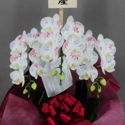 ミディ化粧蘭3本立ち