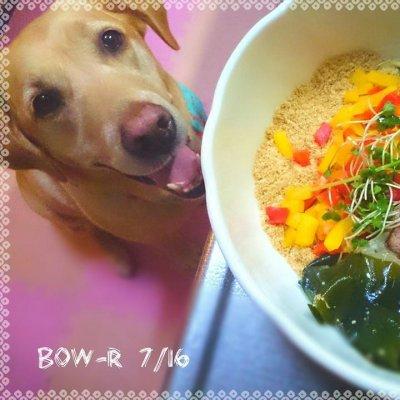 わんこのうんPポーチ屋さんBow-R★ばうあーる★ ポーチとおやつと犬猫料理教室