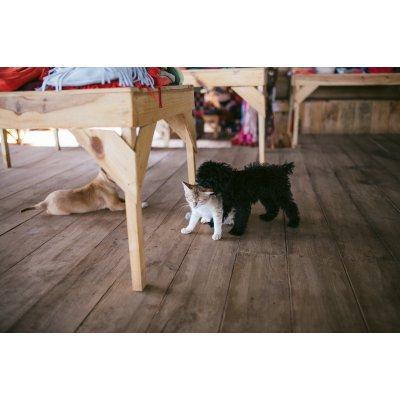 イヌネコ用自然木フローリング