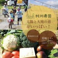 新潟県村上市【桃川農園】野菜とお米の直販/通販「太陽と大地の恵みがいっぱい」