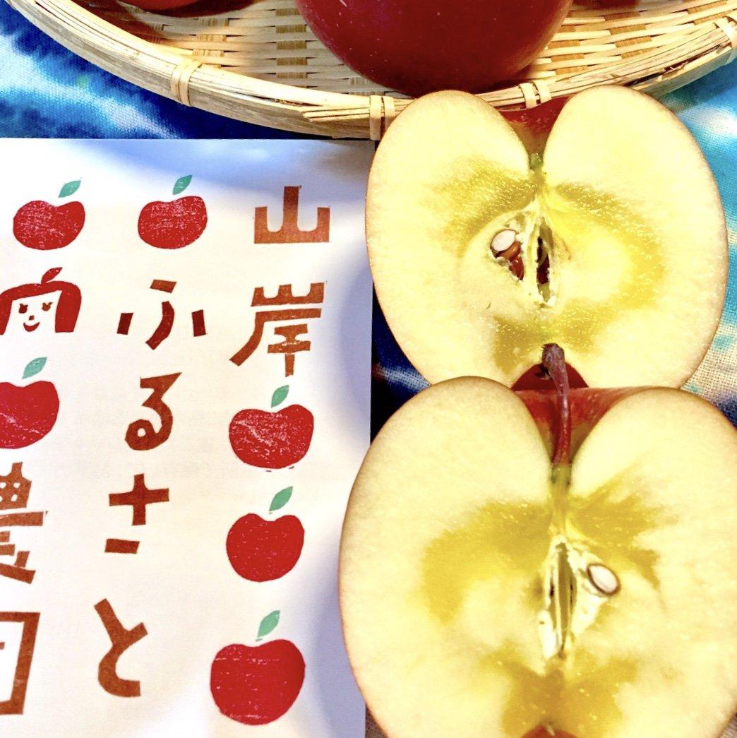 長野 りんご シナノゴールド