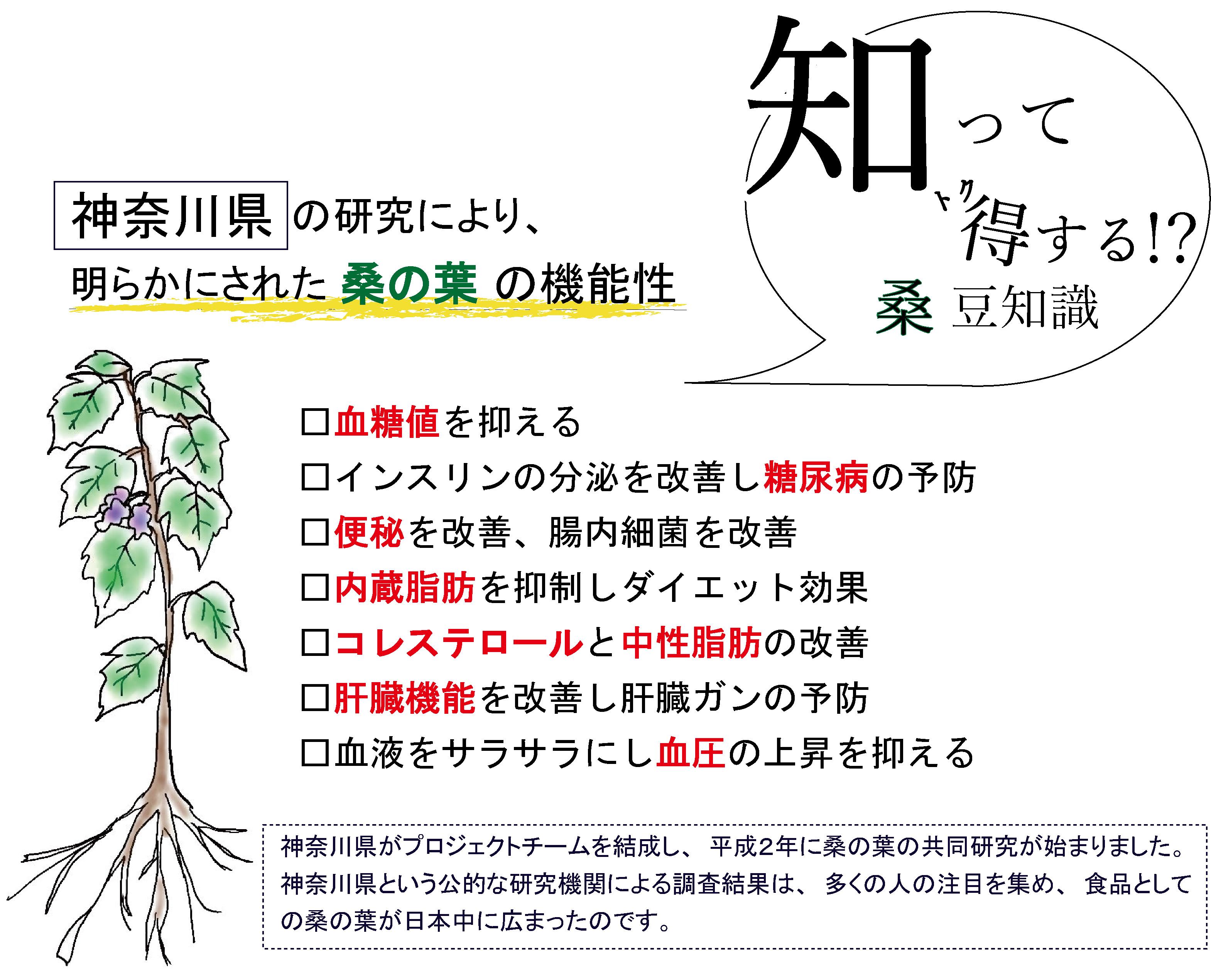 桑の葉茶効能 機能性