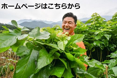 桑郷ホームページ